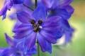 Картинка цветок, растение, паутина, лепестки
