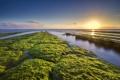 Картинка море, водоросли, природа, побережье, утро