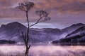 Картинка горы, ночь, озеро, дерево