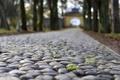 Картинка дорога, осень, парк, камень, арка, архангельское