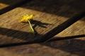 Картинка цветок, желтый, тени, свет, доски, макро, деревяшки
