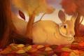 Картинка осень, деревья, листва, заяц, листочек