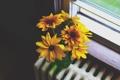 Картинка цветы, желтые, лепестки, подоконник, батарея