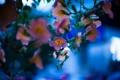 Картинка природа, макро, цветы