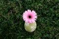 Картинка цветок, трава, природа, фон, обои, растения, ваза