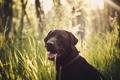Картинка трава, взгляд, морда, собака