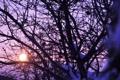 Картинка Цвета, Закат, Дерево