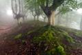 Картинка лес, природа, туман, зонт