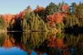 Картинка лес, вода, зеркало, scanlon creek