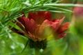 Картинка зелень, цветок, лепестки, боке, хрупкость