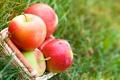 Картинка капли, яблоки, корзина, фрукты, трава, корзинка, природа