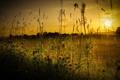 Картинка трава, закат, природа