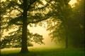 Картинка лес, туман, утро