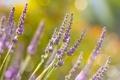 Картинка цветы, красота, весна, цветки, макро фото, весенние обои, весеннее настроение