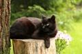 Картинка кошка, кот, лапа, лежит