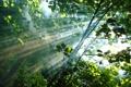 Картинка листья, лес, деревья, солнце, Лучи, дым