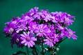 Картинка макро, цветы, лепестки, бутоны, цветки, flowers