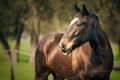 Картинка лето, фон, конь