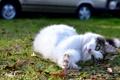 Картинка кошка, трава, котенок, улица, лежит