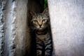 Картинка кошка, фон, щель