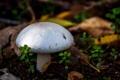 Картинка лес, макро, земля, гриб, растения