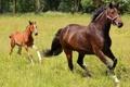 Картинка луг, лошадь, жеребёнок