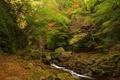 Картинка осень, лес, деревья, ручей, камни, заросли