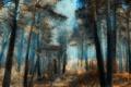 Картинка лес, деревья, яркость