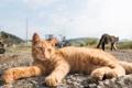 Картинка кот, отдых, рыжий, лежит