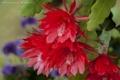 Картинка макро, кактус, цветение