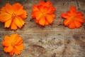 Картинка цветы, лепестки, оранжевые, оранжевые цветы