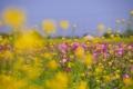 Картинка поле, небо, трава, цветы, луг