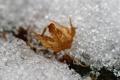 Картинка осень, макро, снег, лёд, лис