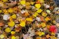 Картинка осень, листья, иголки, хвоя