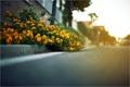 Картинка дорога, цветы, размытость, жёлтые