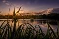 Картинка лес, лучи, озеро, солнце, камыш