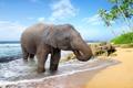 Картинка песок, море, пляж, пальмы, берег, слон, beach