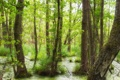 Картинка зелень, лес, трава, листья, вода, весна, молодая