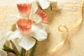 Картинка цветы, нежность, лента, нарциссы