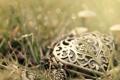 Картинка трава, сердце, кулон