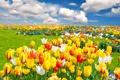 Картинка облака, пейзаж, цветы, природа, тюльпаны, grass, травка
