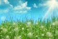 Картинка трава, солнце, лучи, капельки, роса
