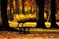 Картинка осень, листья, деревья, скамейка, фон, дерево, обои