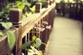 Картинка цветок, листья, забор, дорожка, перила, деревянный, кусты