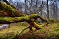 Картинка лес, небо, деревья, мох