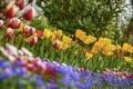 Картинка размытость, тюльпаны, маргаритки