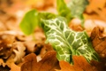Картинка осень, листья, макро, природа, листва, nature, macro