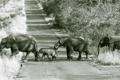 Картинка дорога, природа, слоны