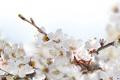 Картинка весна, цветочки, цветение, веточки