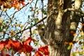 Картинка осень, животные, листья, деревья, природа, белка